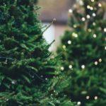 Trzy powody, dla których warto zdecydować się na żywe drzewko świąteczne